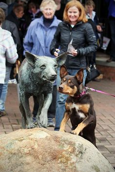 Gorgeous, a real kelpie with a statue of Red Dog!
