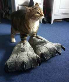 12 Cats That Are Obsessed With Shoes - mom.me