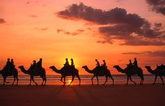 Camel Rides... Deals to Egypt at https://www.onthebeach.co.uk/destinations/egypt
