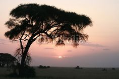 acacia africa african beauty calm forest heaven jungle peace peaceful quiet ray safari savanna savannah scenery scenic serenity setting still stillness sun sunrise sunset tourism travel tree vacation wildlife African Beauty, Theme Ideas, Calming, Kenya, Savannah Chat, Serenity, Lilac, Safari, Tourism
