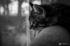 Day Dreaming by TroyMarcyPhotography.com, via Flickr