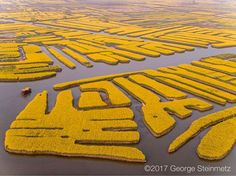 Photograph by George Steinmetz @geosteinmetz  Rapeseed flowers are grown for vegetable oil, but here in Xinghua, China the locals have learned that they earn more money from agro-tourism.  For a few weeks each April many nearby farmhouses are turned into hotels and restaurants, as the visitors come to explore the yellow labyrinth by foot, boat, and ultralight aircraft.  #onassignment yesterday for @natgeo  For a closer view, go to @geosteinmetz