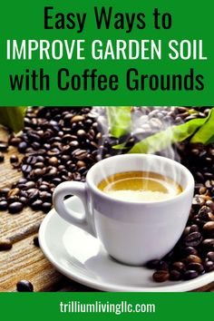 Easy Ways to Improve Garden Soil with Used Coffee Grounds Used coffee grounds are an amazing soil amendment! These tips will help turn hard, compacted ground into loose, airy soil that makes gardening a pleasure! Coffee Grounds Garden, Uses For Coffee Grounds, Organic Vegetables, Growing Vegetables, Growing Tomatoes, Growing Plants, Gardening For Beginners, Gardening Tips, Gardening Courses