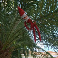 Elf in the shelf stuck in the palm tree!