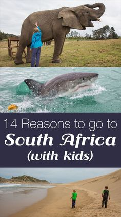 14 Reasons to go to South Africa (with kids). Feed the elephants, walk a cheetah, swim with sharks, ride an ostrich, go hiking, go on safari at Kruger...and so much more!!
