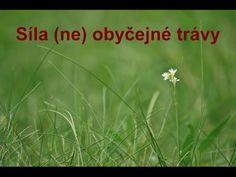 (Ne)obyčejná tráva a rakovina | Síla pro život