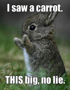 Enjoy the Best of Funny here via http://funnypicdump.com