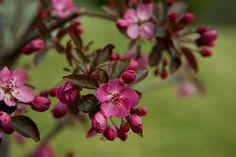 spring in Indiana