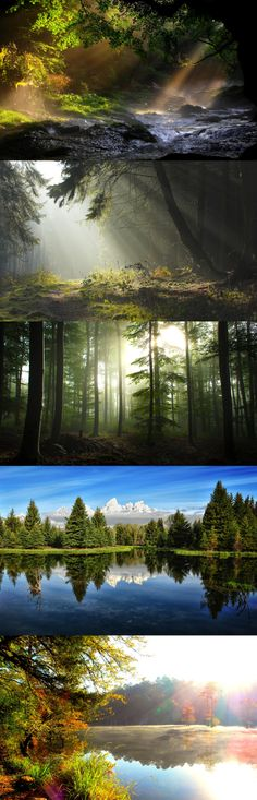 River banks, forest, mist, morning, sun rays, the nature of