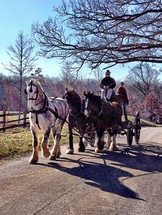 Driving along the carriage trails in Northern Virginia. Photo by Tricia Booker. Has anyone gotten to experience this? I'd love to hear your tales!