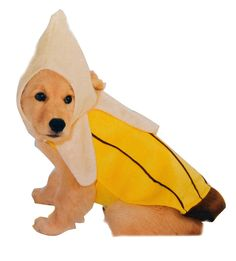 Banana Dog Costume available on TrendyHalloween.com   #Hallowen #Puppies #Dog #Animals