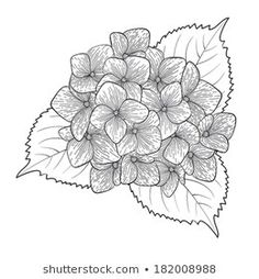 Hasonló képek, stockfotók és vektorképek ehhez: Vector flowers seamless border. Zentangle decorative element. – 315414680 | Shutterstock Embroidery Patterns, Hand Embroidery, Hydrangea Tattoo, Flower Images, Colouring Pages, Fabric Painting, Black Tattoos, Art Tutorials, Vector Art