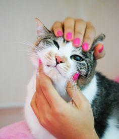 고양이 cat by 호련  on 500px
