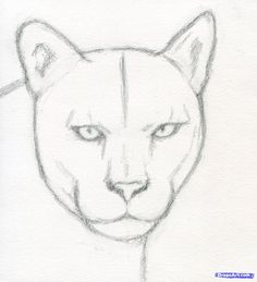 Draw Lions how to draw a realistic puma, mountain lion step 4 Easy Animal Drawings, Art Drawings Sketches Simple, Pencil Art Drawings, Cute Drawings, Animal Sketches Easy, Lion Drawing, Lion Painting, Art Sketchbook, Mountain Lion