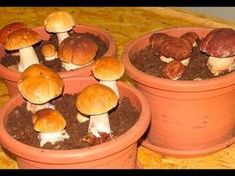 Most people who go in for mushroom growing just go out and buy both the spores (or spawn) and the growth medium. They do this because this is the easiest way to grow mushrooms. But if you are thinking of growing mushrooms commercially Porcini Mushrooms, Stuffed Mushrooms, Container Gardening, Gardening Tips, Culture Champignon, Mushroom Spores, Household Plants, Growing Mushrooms, Organic Protein