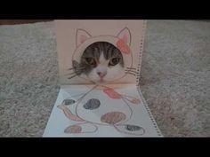 Cat begrudgingly models paper costumes for the world http://amapnow.com http://my.gear.host.com http://needava.com http://renekamstra.com