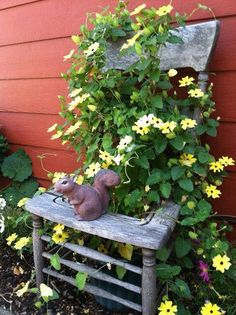 Köynnös kiipeilee vanhassa harmaantuneessa tuolissa, kiva idea :) Climbing flowers & old and rustic - nice idea :)
