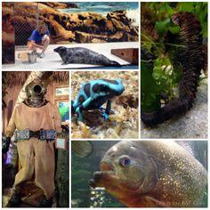 Jenkinsons aquarium christmas 2019 gift