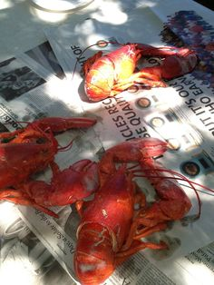 Cape Cod lobsters- This is the way to eat 'em. Throw some clean newspapers down on a picnic table and go for it!