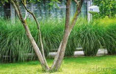 Príjemný charakter záhrady dotvárajú