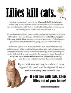 If you live with cats, keep lilies out of your home!