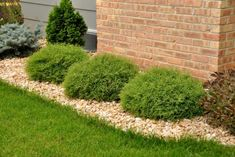 Twenty Evergreen Shrubs For Non-Stop Color | HGTV Landscaping Supplies, Front Yard Landscaping, Backyard Landscaping, Landscaping Ideas, Arborvitae Landscaping, Inexpensive Landscaping, Backyard Patio, Xeriscaping, Country Landscaping