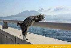 this cat really enjoys scenic views