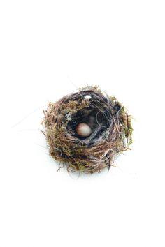 A little birds nest