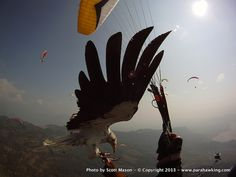 Parahawking: Taking to the Skies With Birds of Prey As Guides