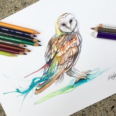 Hedwig watercolour by katy_lipscomb on Instagram