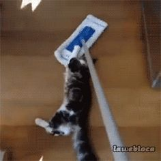 Mopping The Floor With Your Cats Gives It That Special Shine