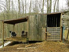 goat house. you could maybe do goat one side horse other
