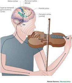 función del cerebro al tocar un instrumento