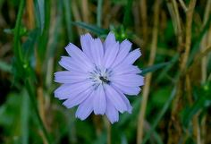 ONtario wildflowers resource!