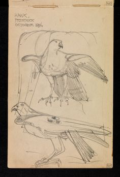 Sketchbook of travels in Scotland and a tour to Kent: p. 39 Hawk, Prestwick, Ayrshire October 1896 / Charles Rennie Mackintosh