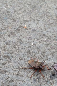 Bug Rule Of Thirds, Bugs, Photography, Photograph, Beetles, Fotografie, Photoshoot, Fotografia, Insects