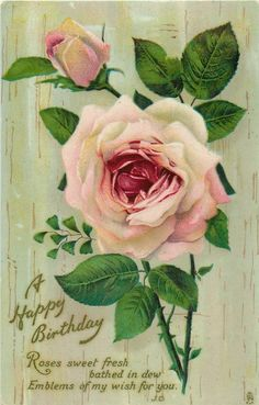 Lovely pink rose & bud, featured on birthday postcard ~ 1911.