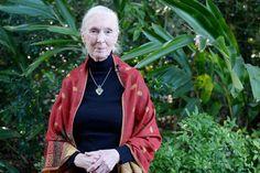 "Jane Goodall Calls Harambe's Death A ""Devastating Loss""  #refinery29  http://www.refinery29.com/2016/06/112642/jane-goodall-cincinnati-zoo-harambe-gorilla-killed"