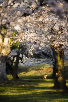 Beautiful nature scenes of Japan | Claudio Beffa Photography
