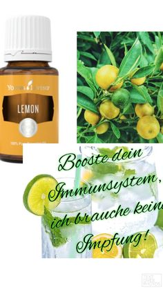 Young Living, Easy, Essential Oils, Fruit, Food, Immune System, Health, Simple, Essen