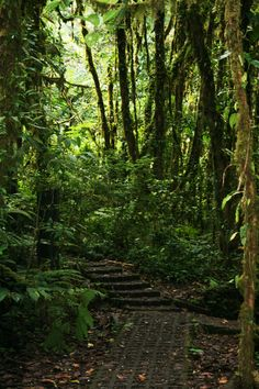 Loved our walks through the jungle in El Peten, Guatemala