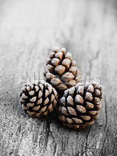 Frosted Pine Cones sur Rustic Wooden Table Impression par James Guilliam sur AllPosters.fr