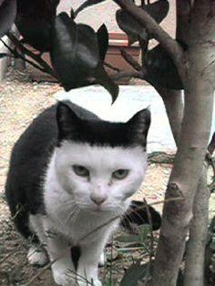 【萌え死に注意】 「反則的な猫の模様」 可愛すぎるwwwwwwwwwwwww