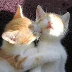 two cats in love orange cat white cat. Funny Cat Photos, Funny Cats, Silly Cats, Cute Kittens, Cats And Kittens, I Love Cats, Crazy Cats, Cute Baby Animals, Funny Animals