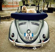 Giancarlo Prandelli, from Desentis, Switzerland. His two VW Beetle Cabriolets, a 1953 L227 Strato Silver Metallic and a 1958 Turkish Green.