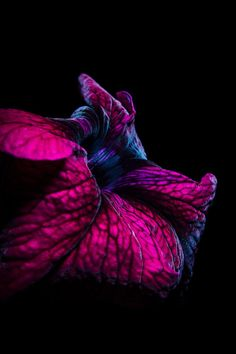 513 best flowers with black backgrounds images beautiful