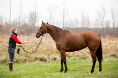 """Arc de Nua is a gorgeous 6 year old, 16.1hh Thoroughbred mare. Arc de Nua, or """"Mona,"""" as we call her at the barn, has a classic elegance to her, with a big, strong build, but a soft, caring eye. Under saddle, Mona is confident but cautious. She stands to mount, and goes along very well with a confident rider who can keep her engaged. She would excel with a intermediate or advanced rider who wants a partner to share leisure time or in a flat-work-only program."""