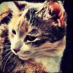 Maizy Moo, my ten year old kitten.