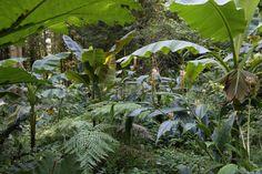 le jardin jungle karlostachys, Eu, Normandie