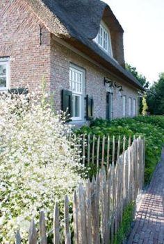 Cleft chestnut fence around farm, Crambe cordifolia (heartleaf crambe) Klazina van Kippersluis